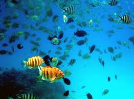 http://salma-gdo.neocities.org/info/Proyecto-B.3/galeria-prueba/peces.jpg